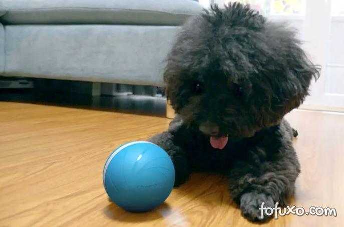 Conheça a bolinha inteligente que brinca com seu pet