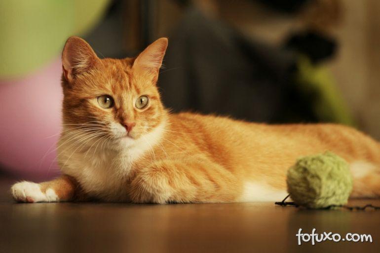 USP adapta teste de personalidade americano para conhecer personalidade do gato