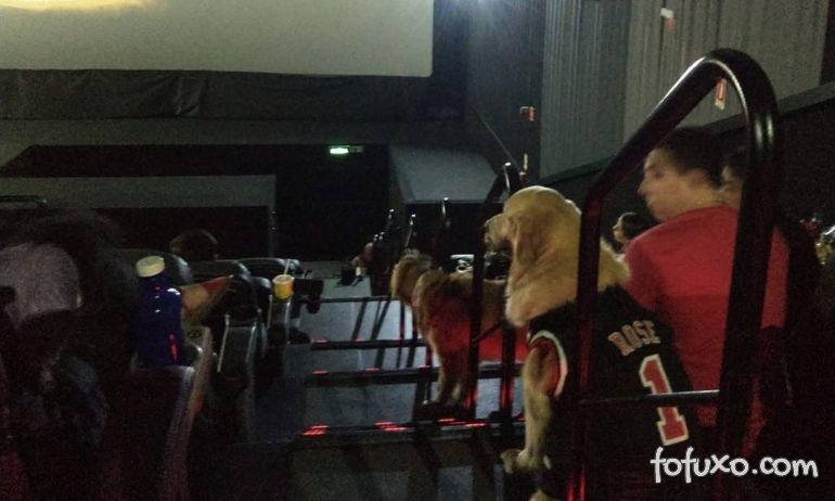 Cinema de São Paulo terá sessão mensal para tutores e cães