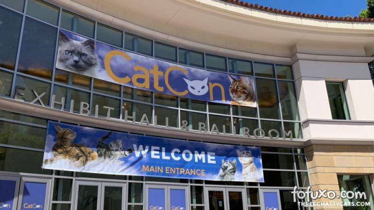 Gatos celebridades atraem fãs para convenção nos Estados Unidos