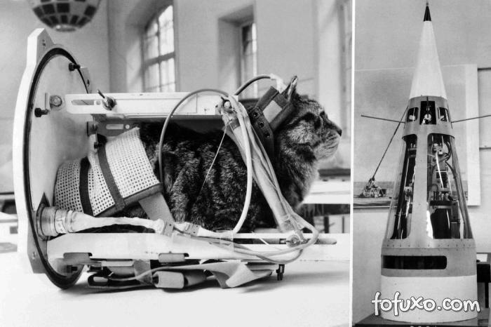 Primeira gata a fazer uma viagem espacial ganhará estátua na França