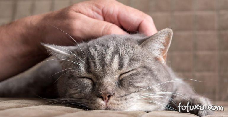 10 minutos de carinho em gatos em cachorros reduz estresse nos humanos