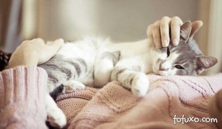 Ciência explica a maneira correta de se acariciar um gato