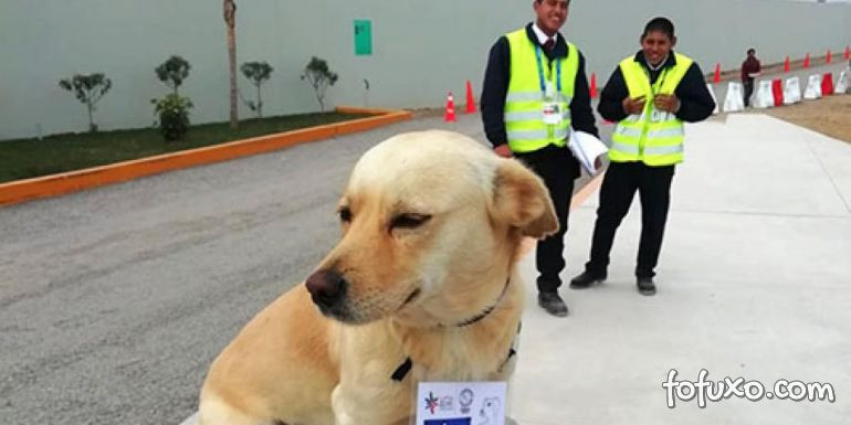 Cachorro rouba a cena e vira chefe de segurança no Pan-Americano de surfe