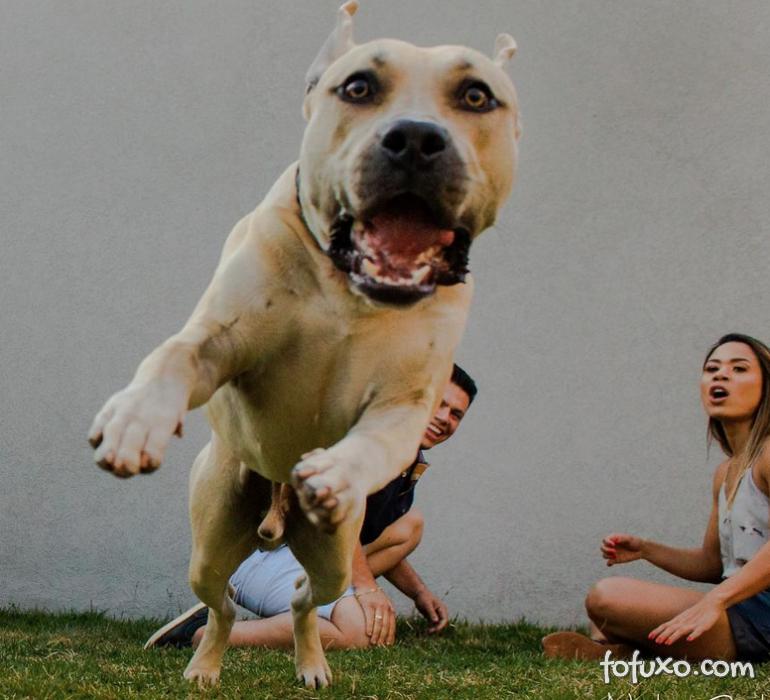 Casal viraliza com cachorro em ensaio pré-casamento - Foto 6