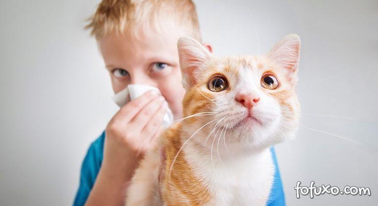 Cientistas desenvolvem vacina contra alergia a pelos de gato