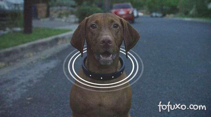 Conheça algumas tecnologias que facilitam os cuidados aos cachorros