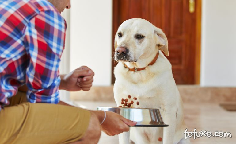 Conheça os erros mais comuns na hora de alimentar um cachorro