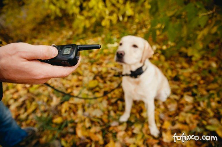 Petrópolis (RJ) proíbe comercialização e uso de coleira de choque em cachorros