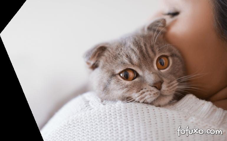 5 erros comuns nos cuidados com os gatos