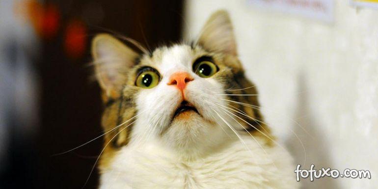 5 Dicas para lidar com gatos inseguros e medrosos