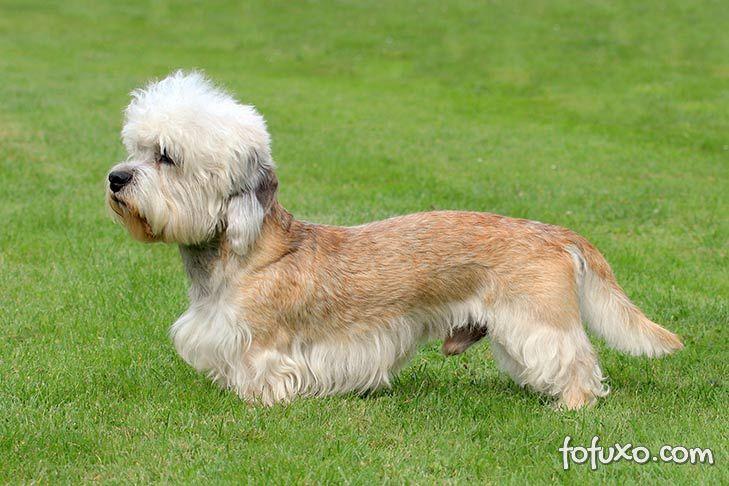 5 raças exóticas de cães no mundo