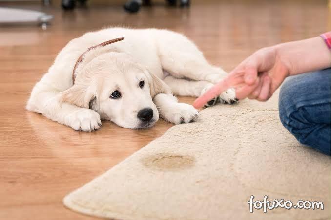 Saiba como acabar com o cheiro de xixi de cachorro dentro de casa