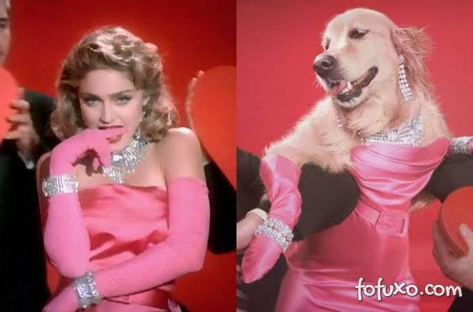 Instagram faz sucesso com cachorro replicando poses de Madonna 1