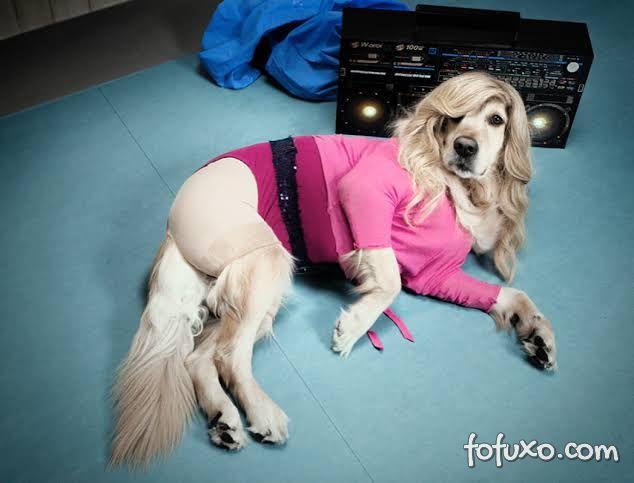 Instagram faz sucesso com cachorro replicando poses de Madonna 3