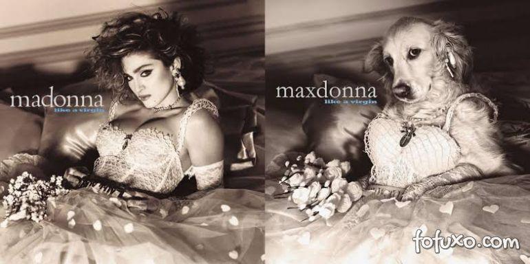 Instagram faz sucesso com cachorro replicando poses de Madonna 4