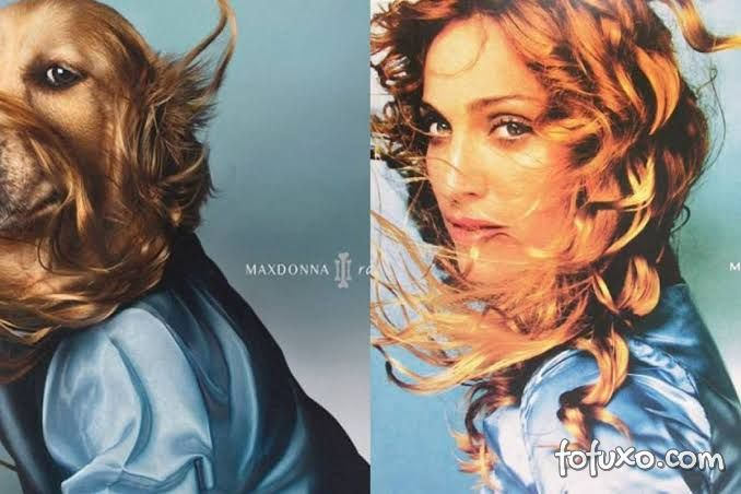 Instagram faz sucesso com cachorro replicando poses de Madonna 5