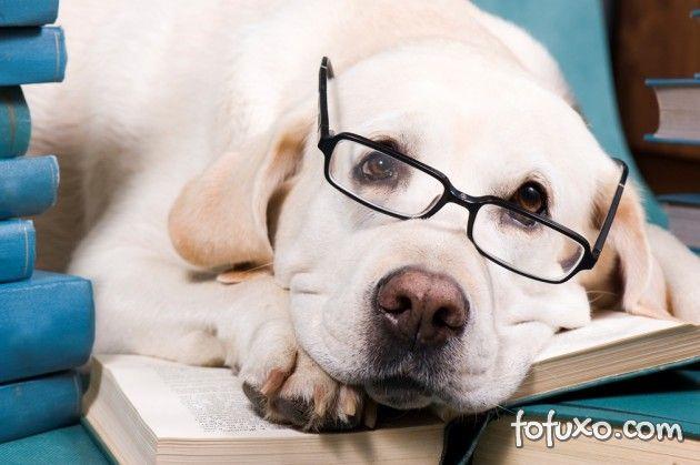 Pesquisa afirma que cães também sabem fazer contas