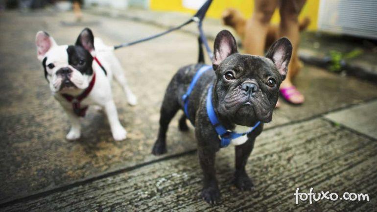 Conheça as raças de cachorros consideradas mais populares da década no Brasil