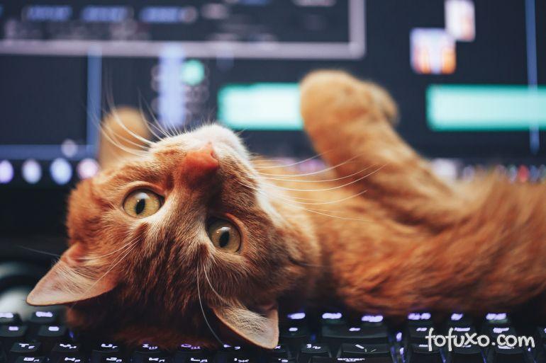 Por que se fala que os gatos possuem 7 vidas?