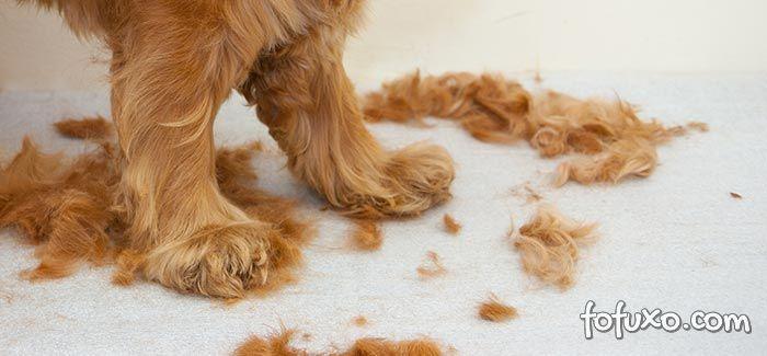 Dicas para se livrar dos nós dos pelos em cachorros