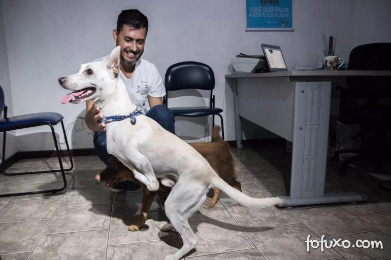 Cachorro com deficiência é abandonado duas vezes, mas consegue lista de interessados
