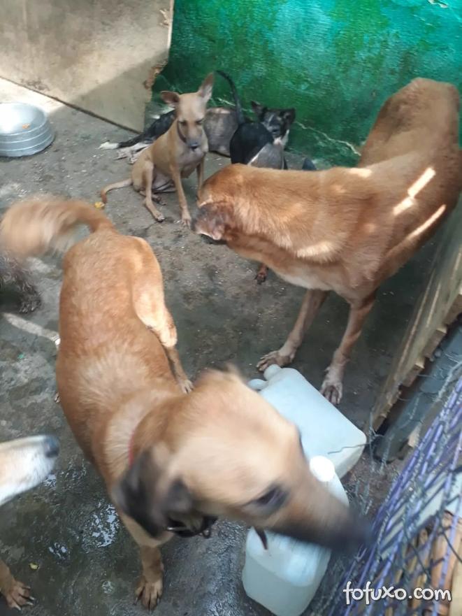 Dona de abrigo de animais é indicada por maus-tratos