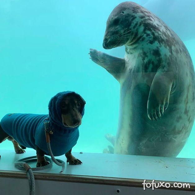 Fotógrafo registra encontro entre cachorro e foca