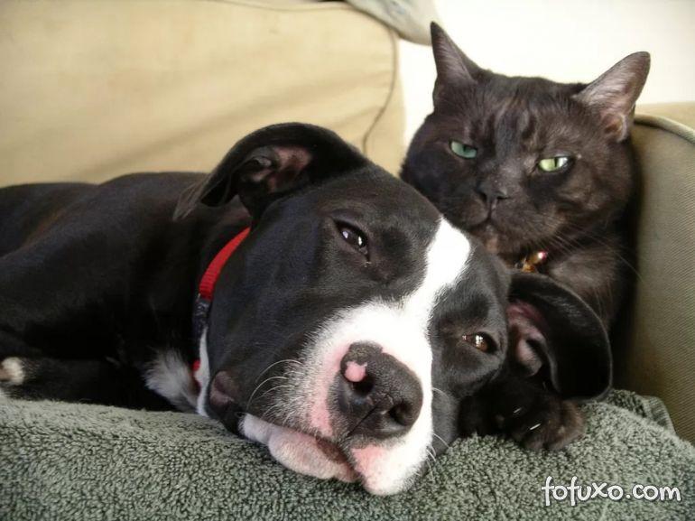 Donos de cachorros gastam mais do que donos de gatos