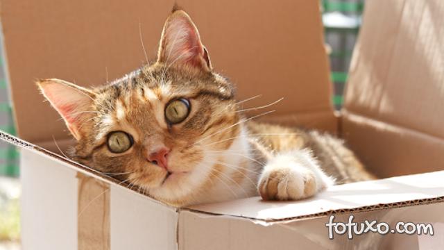 7 coisas que são quem tem gato entende