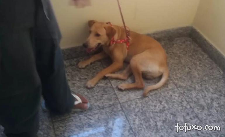 Cachorro é resgatado em cima de ar-condicionado de apartamento no 7º andar