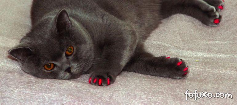 Dicas para cuidar das unhas dos gatos