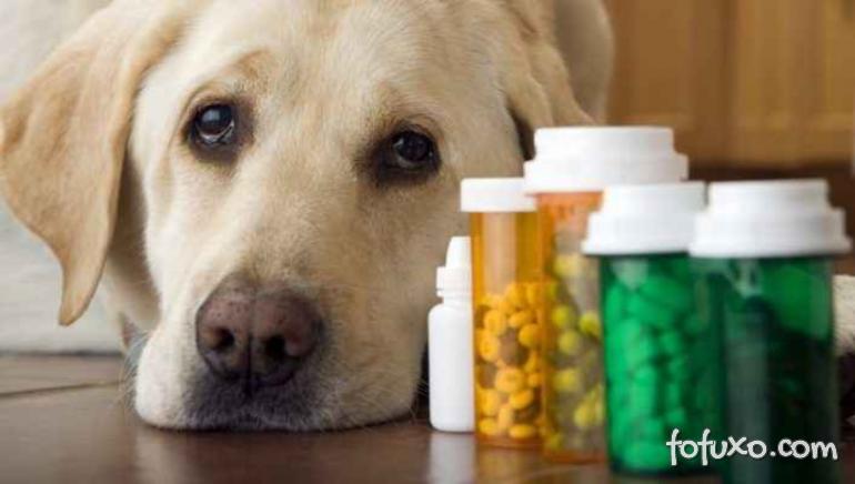 Ansiedade dos cachorros pode estar relacionado a raça do cachorro