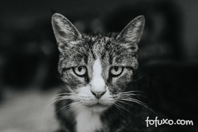 DTUIF – Saiba como tratar a doença em gatos
