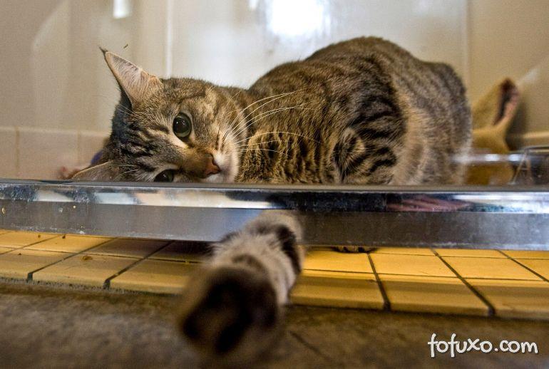 Gatos são diagnosticados com novo coronavírus nos Estados Unidos