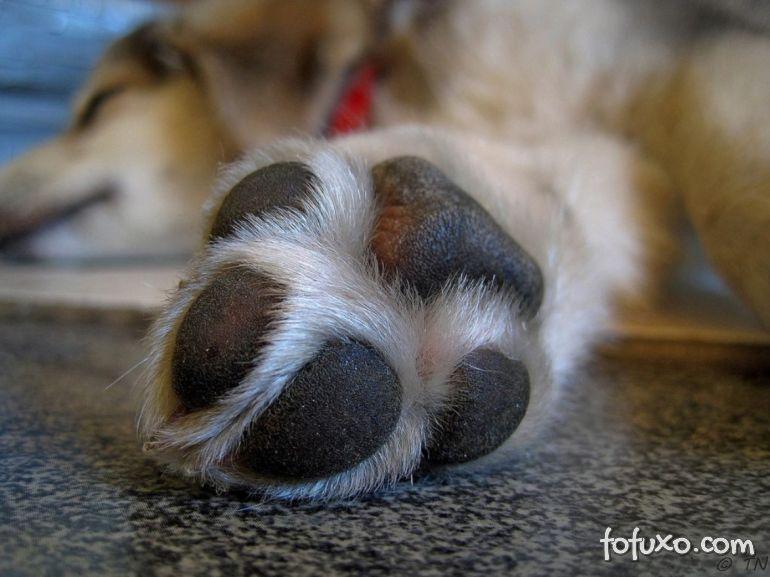 Confira dicas para limpar as patas dos cachorros