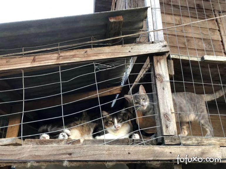 """ONG faz """"lives"""" para incentivar adoção de animais"""