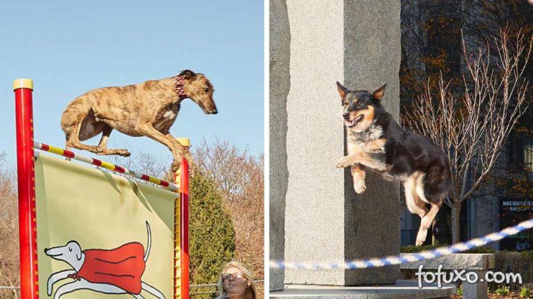5 recordes bons para cachorro encontrados no Guinness Book
