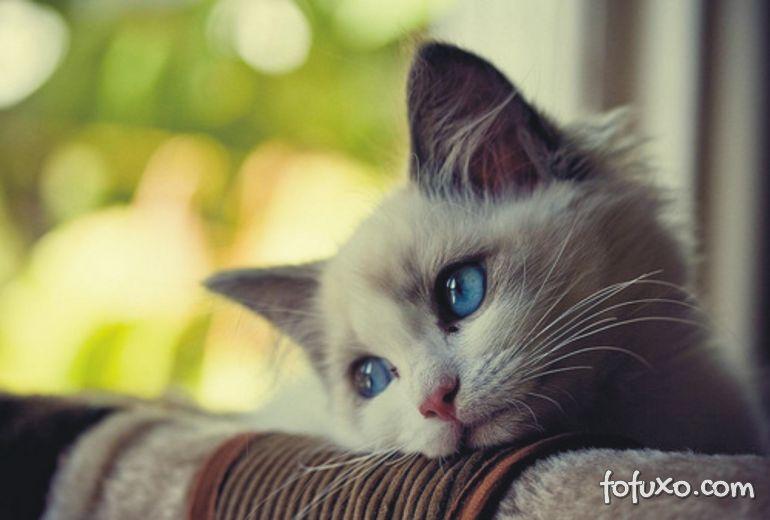 4 sinais de que seu gato não está bem de saúde