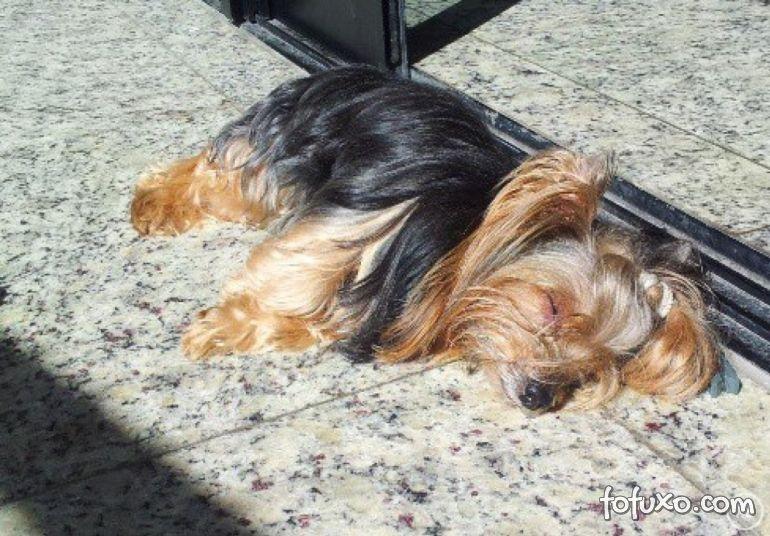 Confira os benefícios do banho de sol para os cachorros