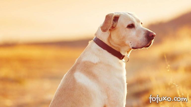 Confira os principais motivos para o seu cachorro ser antissocial