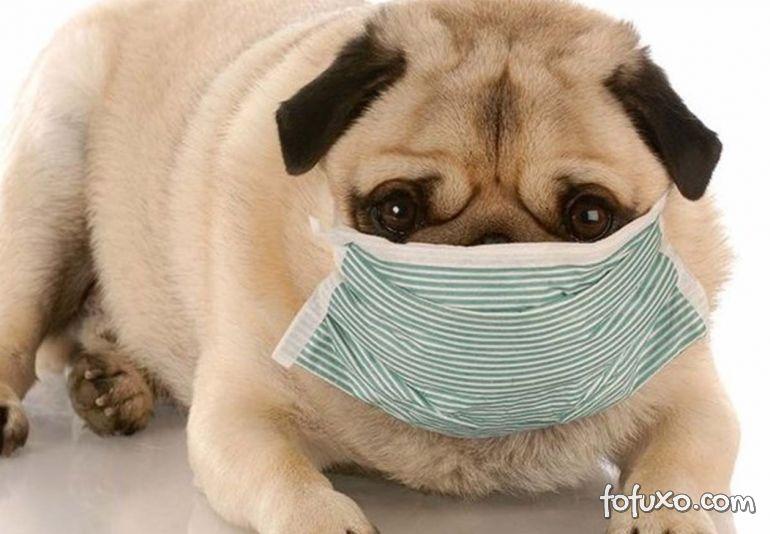 4 cuidados essenciais com os cães em tempos de quarentena