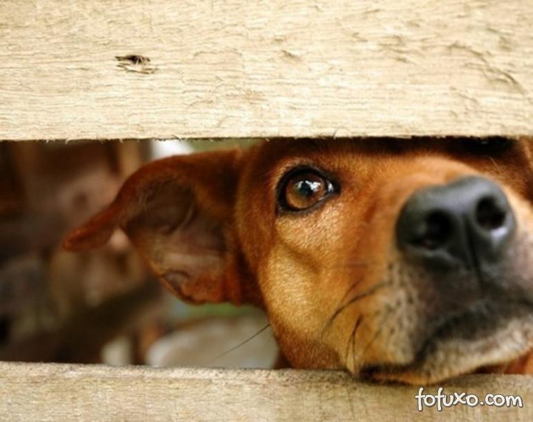 Holanda consegue zerar número de cães abandonados