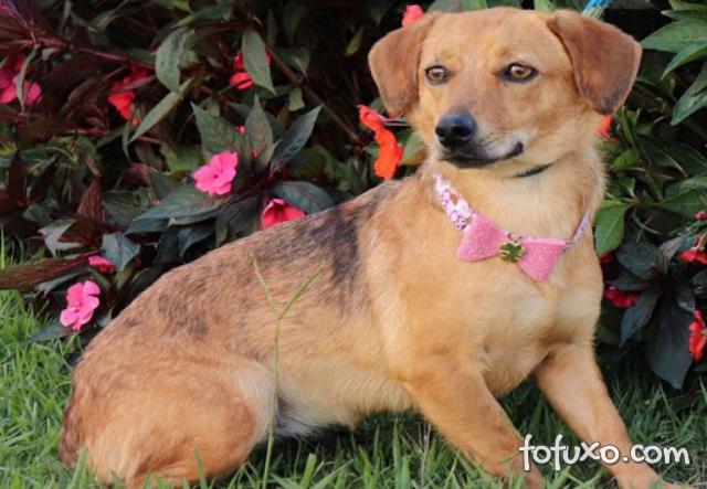 Vale coloca cães e gatos resgatados para adoção