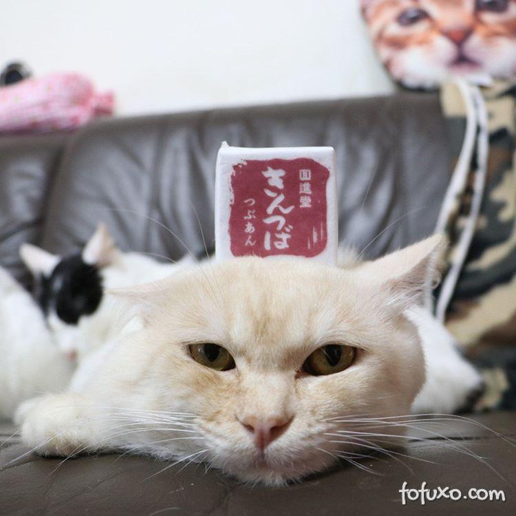 Conheça 4 felinos famosos na internet para celebrar o Dia Internacional do Gato