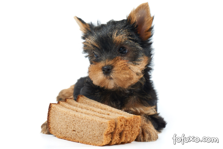 Por que os cachorros não podem comer pão?