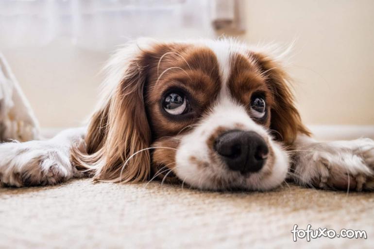 4 atividades para entreter seu cão em casa