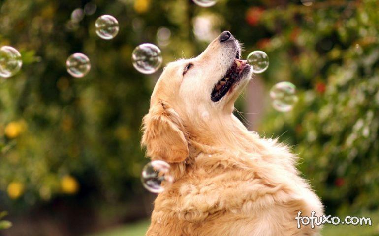4 dicas para oferecer uma excelente qualidade de vida para o seu cão
