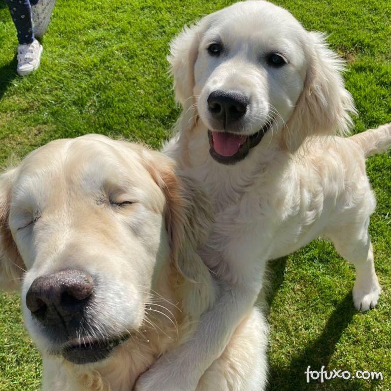 Cachorro cego ganha o seu próprio cão-guia 1