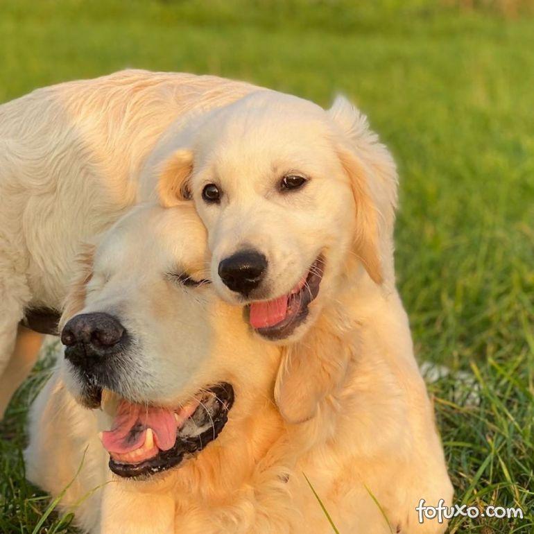 Cachorro cego ganha o seu próprio cão-guia 2